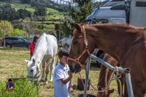 Os Parrulos_mondonedo_hipica_clases equitacion_311