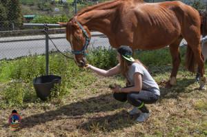 Os Parrulos_mondonedo_hipica_clases equitacion_316