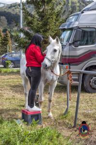Os Parrulos_mondonedo_hipica_clases equitacion_321