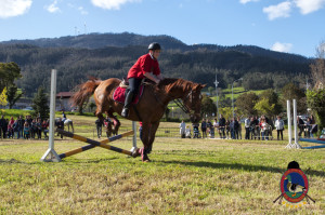 Os Parrulos_mondonedo_hipica_clases equitacion_33