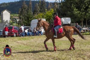 Os Parrulos_mondonedo_hipica_clases equitacion_348