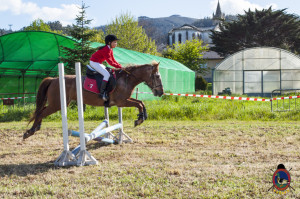 Os Parrulos_mondonedo_hipica_clases equitacion_60