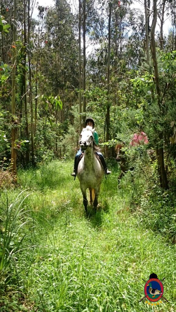 rutas a caballo.2.4
