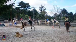 clases de equitacion la coruna_os parrulos_40