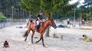 clases de equitacion la coruna_os parrulos_44