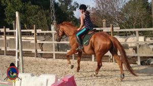 Clases de equitación_paseos a caballo_hipica La Coruna_Os Parrulos_68