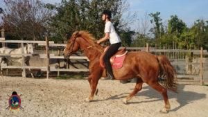 Clases de equitación_paseos a caballo_hipica La Coruna_Os Parrulos_71