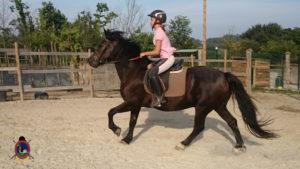 Clases de equitación_paseos a caballo_hipica La Coruna_Os Parrulos_78