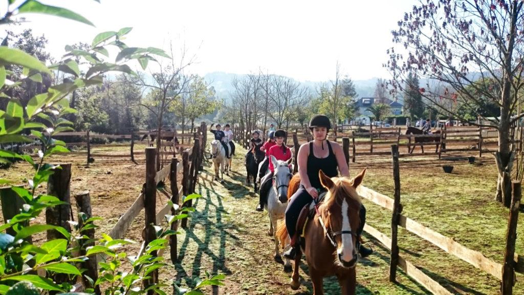 rutas-a-caballo_clases-de-equitacion_hipica-la-coruna_os-parrulos_caballos_r1