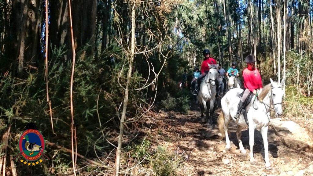 rutas-a-caballo_clases-de-equitacion_hipica-la-coruna_os-parrulos_caballos_r22