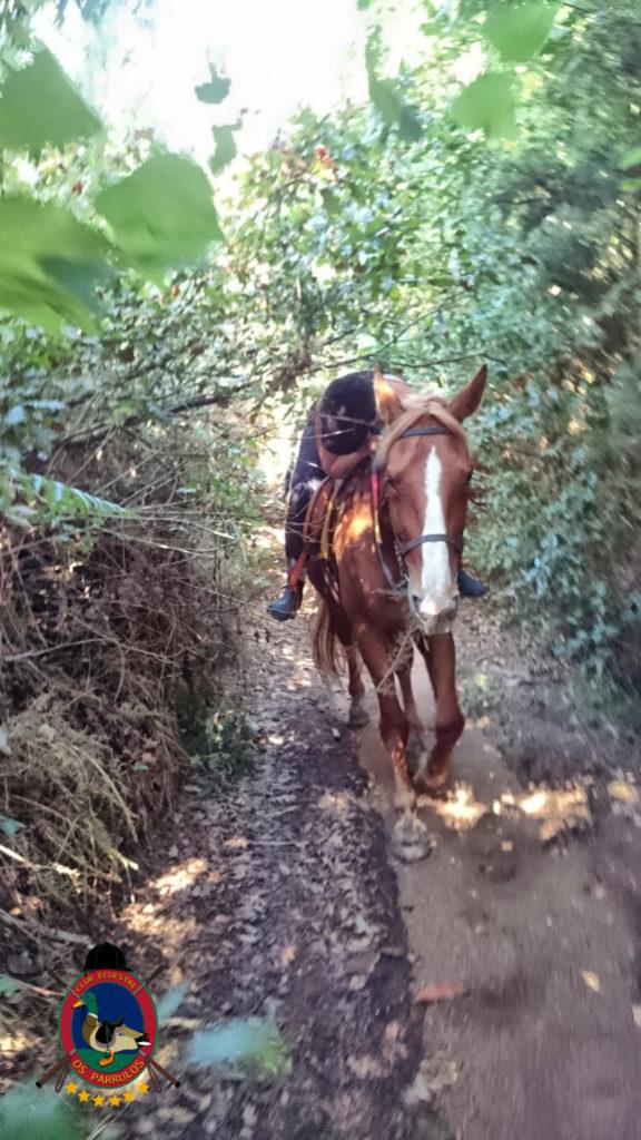 rutas-a-caballo_clases-de-equitacion_hipica-la-coruna_os-parrulos_caballos_r26