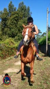 rutas-a-caballo_clases-de-equitacion_hipica-la-coruna_os-parrulos_caballos_r27