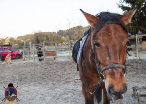 Cases de equitación_A Coruna_Os Parrulos_caballos_carnaval_59