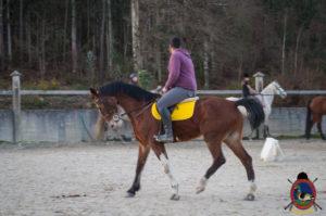 Cases de equitación_A Coruna_Os Parrulos_caballos_carnaval_64