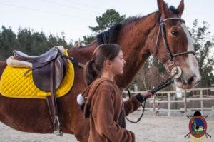 Cases de equitación_A Coruna_Os Parrulos_caballos_carnaval_68