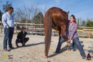 Esther Cano de Vegas_Os Parrulos_Osteopatia equina_animal zen_caballos 101