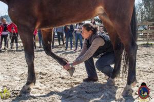 Esther Cano de Vegas_Os Parrulos_Osteopatia equina_animal zen_caballos 11