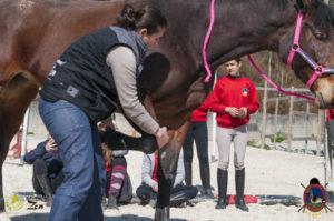 Esther Cano de Vegas_Os Parrulos_Osteopatia equina_animal zen_caballos 12