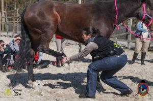 Esther Cano de Vegas_Os Parrulos_Osteopatia equina_animal zen_caballos 13