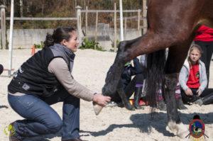 Esther Cano de Vegas_Os Parrulos_Osteopatia equina_animal zen_caballos 15