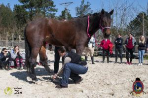 Esther Cano de Vegas_Os Parrulos_Osteopatia equina_animal zen_caballos 20
