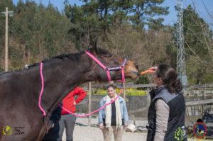Esther Cano de Vegas_Os Parrulos_Osteopatia equina_animal zen_caballos 21