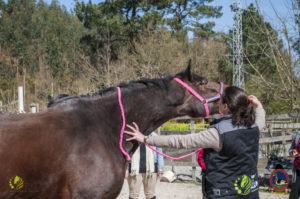 Esther Cano de Vegas_Os Parrulos_Osteopatia equina_animal zen_caballos 22