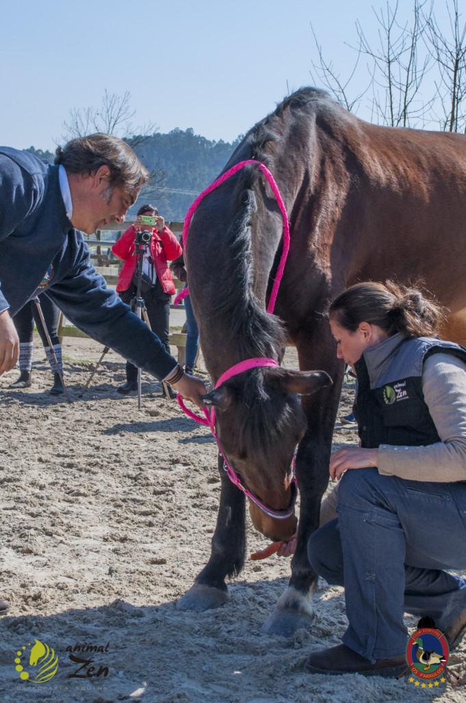 Esther Cano de Vegas_Os Parrulos_Osteopatia equina_animal zen_caballos 23