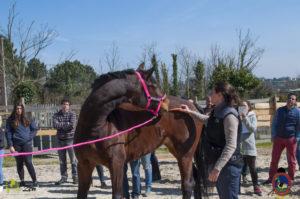 Esther Cano de Vegas_Os Parrulos_Osteopatia equina_animal zen_caballos 24