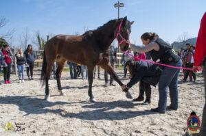 Esther Cano de Vegas_Os Parrulos_Osteopatia equina_animal zen_caballos 26