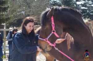 Esther Cano de Vegas_Os Parrulos_Osteopatia equina_animal zen_caballos 28