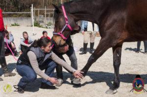 Esther Cano de Vegas_Os Parrulos_Osteopatia equina_animal zen_caballos 31