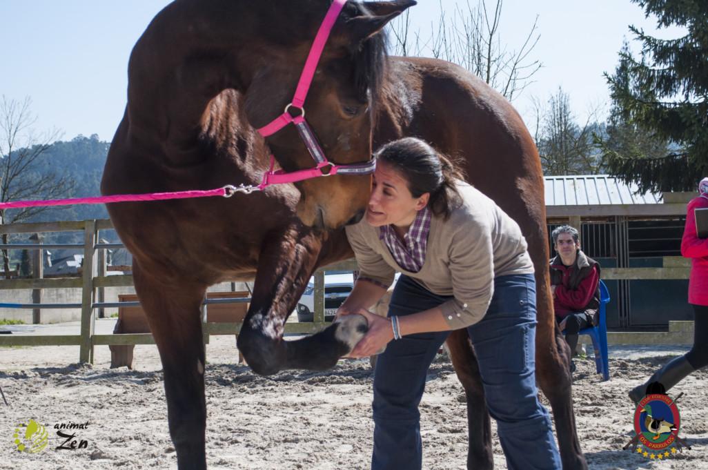 Esther Cano de Vegas_Os Parrulos_Osteopatia equina_animal zen_caballos 33