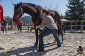 Esther Cano de Vegas_Os Parrulos_Osteopatia equina_animal zen_caballos 37