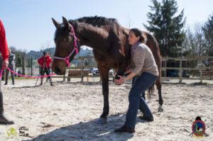 Esther Cano de Vegas_Os Parrulos_Osteopatia equina_animal zen_caballos 38