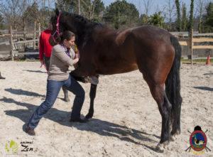 Esther Cano de Vegas_Os Parrulos_Osteopatia equina_animal zen_caballos 39