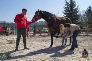 Esther Cano de Vegas_Os Parrulos_Osteopatia equina_animal zen_caballos 41