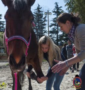 Esther Cano de Vegas_Os Parrulos_Osteopatia equina_animal zen_caballos 44