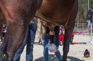 Esther Cano de Vegas_Os Parrulos_Osteopatia equina_animal zen_caballos 49