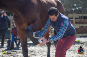 Esther Cano de Vegas_Os Parrulos_Osteopatia equina_animal zen_caballos 50