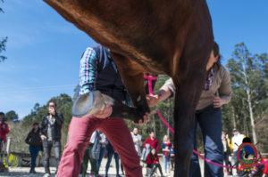 Esther Cano de Vegas_Os Parrulos_Osteopatia equina_animal zen_caballos 51