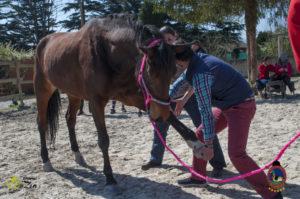 Esther Cano de Vegas_Os Parrulos_Osteopatia equina_animal zen_caballos 52
