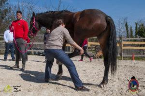 Esther Cano de Vegas_Os Parrulos_Osteopatia equina_animal zen_caballos 54