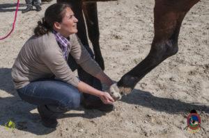 Esther Cano de Vegas_Os Parrulos_Osteopatia equina_animal zen_caballos 55