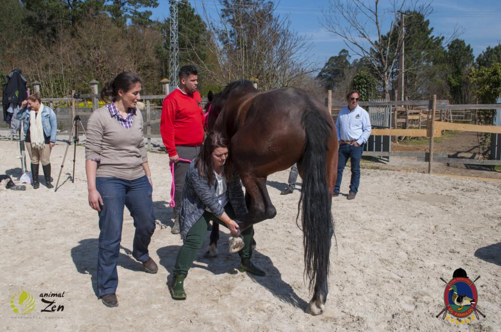 Esther Cano de Vegas_Os Parrulos_Osteopatia equina_animal zen_caballos 56