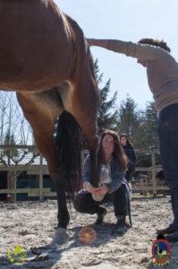 Esther Cano de Vegas_Os Parrulos_Osteopatia equina_animal zen_caballos 58
