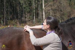 Esther Cano de Vegas_Os Parrulos_Osteopatia equina_animal zen_caballos 60