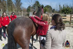 Esther Cano de Vegas_Os Parrulos_Osteopatia equina_animal zen_caballos 61