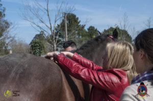 Esther Cano de Vegas_Os Parrulos_Osteopatia equina_animal zen_caballos 62
