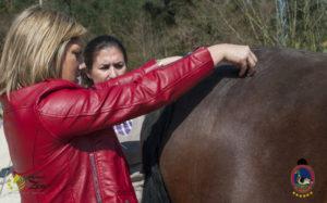 Esther Cano de Vegas_Os Parrulos_Osteopatia equina_animal zen_caballos 64